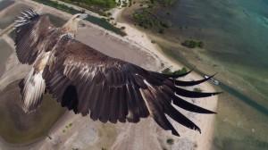 Águila observando desde lo alto el parque nacional de Indonesia