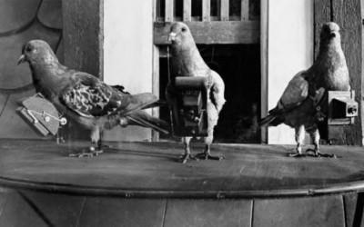 Las palomas fotográficas, los drones de la I Guerra Mundial