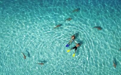 Descubre Dronestagram, el Nuevo Instagram o Red Social para Drones