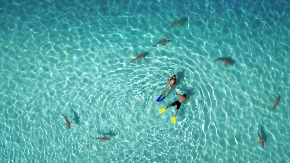 Buceo en apnea con tiburones / Primer premio de Naturaleza